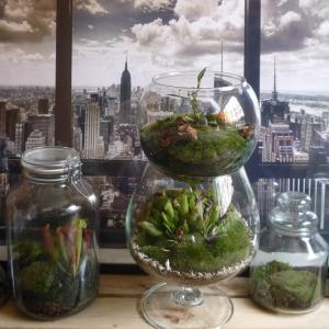 inout terrarium